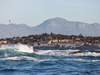 Seal island ved Hout Bay
